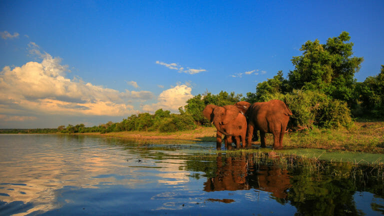 An elephant herd comes to drink at river in Kruger National Park.