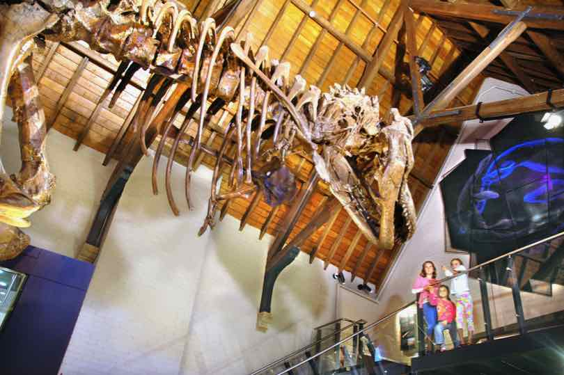 Kids looking at the Tyrannosaurus rex skeleton cast at the Australian Fossil & Minerals museum in Bathurst